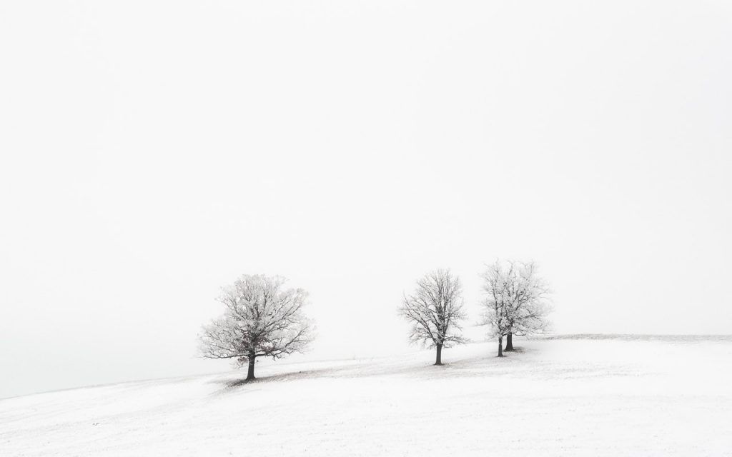 dunn county, hoarfrost, menomonie, winter, frost, trees, wisconsin