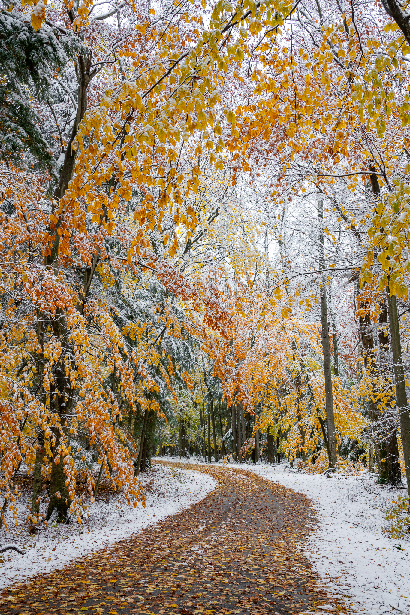 door county, fall colors, fall colors in snow, potawatomi state park, sturgeon bay, wisconsin